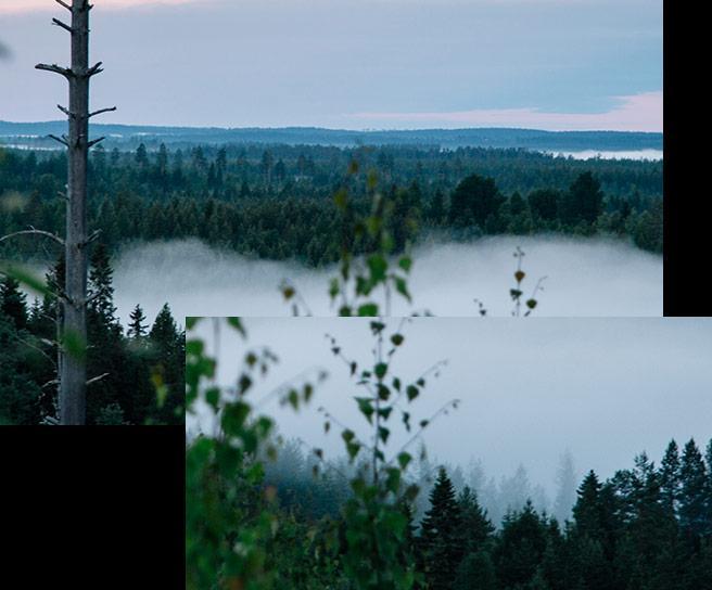 Maisemakuva: metsää ja järvi